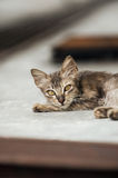 Stray Kitten 2 royalty free stock photo
