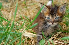 Stray kitten Royalty Free Stock Photography