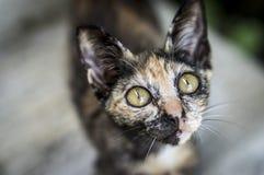 Stray kitten. With big begging eyes Stock Image
