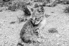 Stray kitten cat Royalty Free Stock Photography