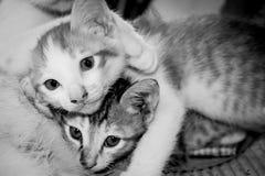 Stray kitten cat Royalty Free Stock Image