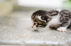 Stray kitten. Stray cat with kitten in a shelter royalty free stock photos