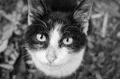 Stray kitten eyes Royalty Free Stock Photography