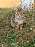 Stray kitten in the grass Royalty Free Stock Photos