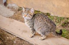 Stray kitten in the grass Stock Photo