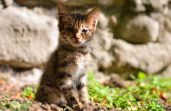 Stray kitten with ill eyes Royalty Free Stock Images