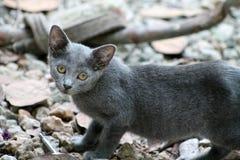 Stray kitten looking straight at camera Royalty Free Stock Photos