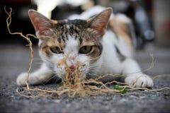 Stray Kitten. Plays on a City Street Stock Image