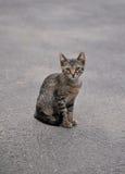 Stray kitten  on the sidewalk Stock Photos
