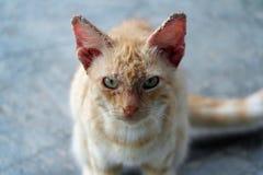 Stray Kitten Stock Photography