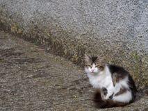 Stray kitten in street background. Cute. Stock Photo