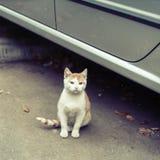 Stray kitten on the street Royalty Free Stock Photo