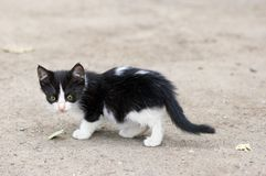 Stray kitten walking stock photos