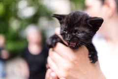 Stray kitten. A woman holding a two-week old kitten of a stray cat born in the yard Stock Photography