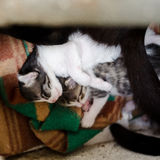 Stray kittens. Stray cat with kittens in a shelter Stock Images