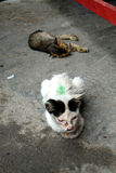 Stray Kittens 6 Royalty Free Stock Image