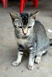 Stray Kittens 1 Royalty Free Stock Photo