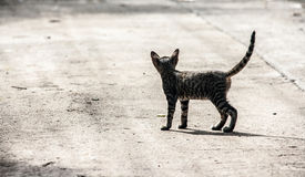 Stray kitty on the cement floor Royalty Free Stock Photography