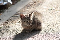 Stray kitty in the street royalty free stock image