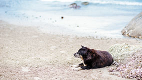 Stray lonely dog on the beach Royalty Free Stock Photography