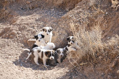 Stray puppies Stock Image