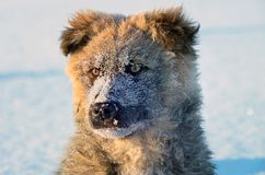 Stray puppy Royalty Free Stock Image