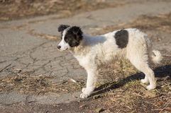 Stray puppy with black spots looking out for mom`s returning from hunting Stock Image