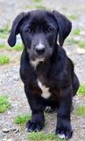 Stray puppy dog Stock Photo