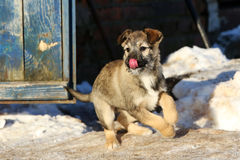 Stray puppy in the snow Royalty Free Stock Images