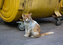 Stray red cat sitting on a dustbin Royalty Free Stock Images