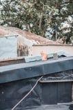 Stray on roof. Outdoor, hong kong royalty free stock photos