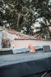Stray on roof. Outdoor, hong kong stock photography
