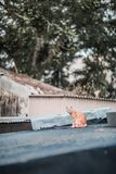 Stray on roof. Outdoor, hong kong stock photo