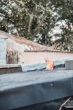 Stray on roof. Outdoor, village stock photo