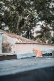Stray on roof. Outdoor, village stock image