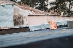 Stray on roof. Outdoor, village royalty free stock images