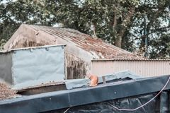Stray on roof. Outdoor, countryside royalty free stock image