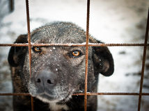 Stray and sad dog. This dog is in a shelter, sadly but hopefully waits for his new owner Stock Photos