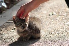 Stray kitty in the street stock photos