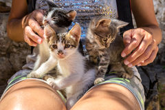 Stray sick kittens Royalty Free Stock Image