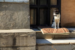 Stray skinny cat on street Stock Photo
