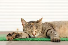 Stray sleeping tabby cat lying on green mat copyspace Stock Images