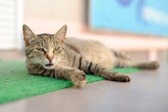 Stray sleeping tabby cat lying on green mat copyspace Royalty Free Stock Images