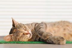 Stray sleeping tabby cat lying on green mat copyspace Stock Photography