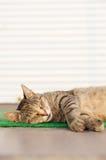 Stray sleeping tabby cat lying on green mat copyspace Stock Photos