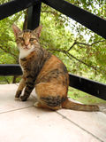 Stray stained cat looking at camera. Sitting on the balcony Stock Image