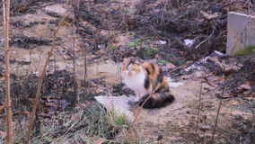 Stray street cat near industrial zone stock video footage