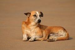 Stray street dog Stock Photography