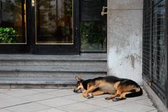 Stray street dog Stock Photos