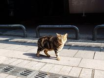 Stray striped cat looking straight to the camera stock photo